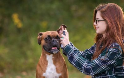 How to Stop your Dog's Ear Infections with Sprayable Ear Wash