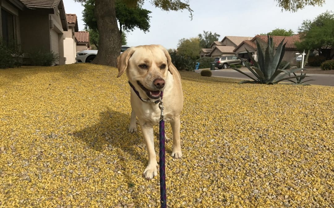3 Effective Ways to Keep Dog Allergies to a Minimum