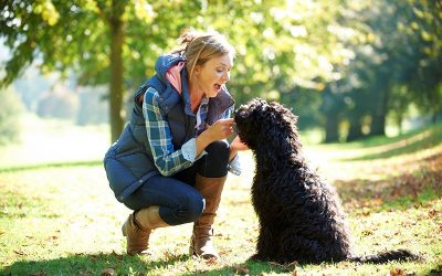 Your Dog's Allergies Affect the Whole Family; 3 Steps to Tackling Canine Allergies